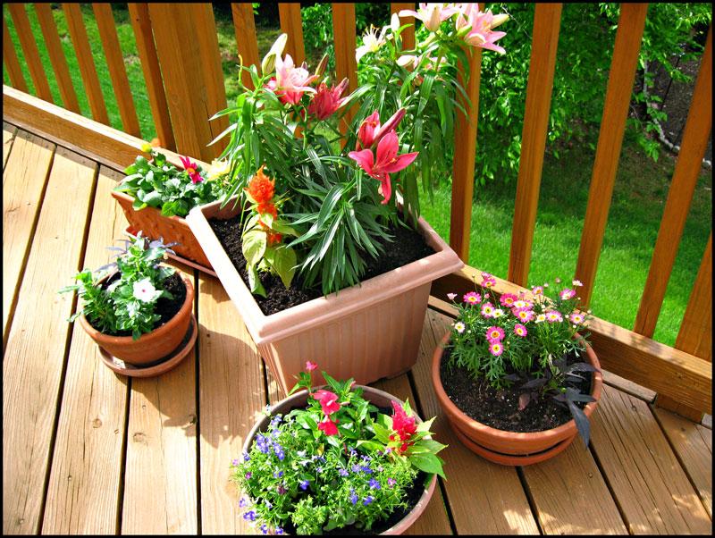 Flower-pot-garden
