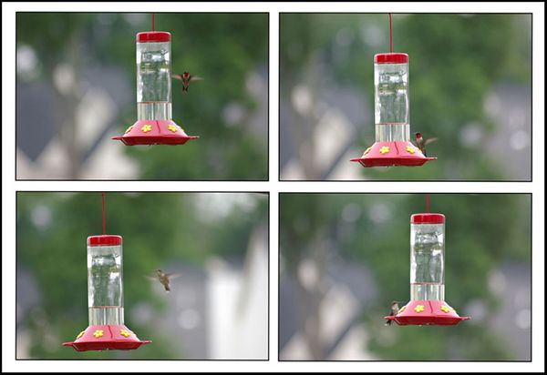 Hummers-in-flight