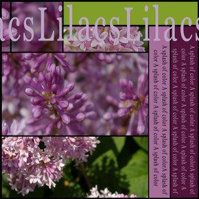 Lilacsrightcopy